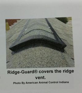 Ridge-Guard covers the ridge vent